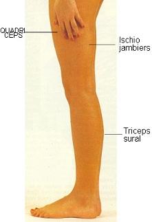 muscles MIprofil 715555285d4