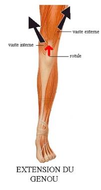 douleur pointe genou